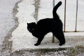 černá kočka protažení